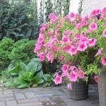 arkadia-kwiaty2